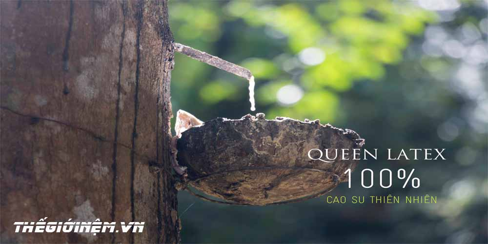 nệm cao su Vạn Thành Standard được chế tạo từ 100% cao su thiên nhiên